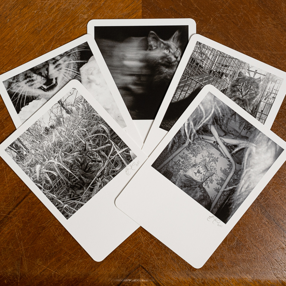 My Feral Family Deluxe 9 Card Set - Expanded View. Set Includes 1 of 5 limited edition Fine Art Prints. (Edition Size: 20 of each print) Photo printed on Hahnemühle Photo Rag Fine Art Paper