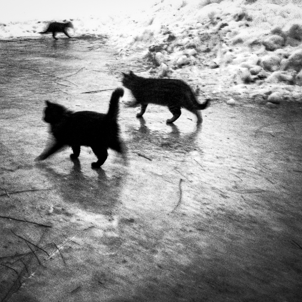 Cats on Ice; New Franken, WI 2014; © 2014 Jason Houge, All Rights Reserved