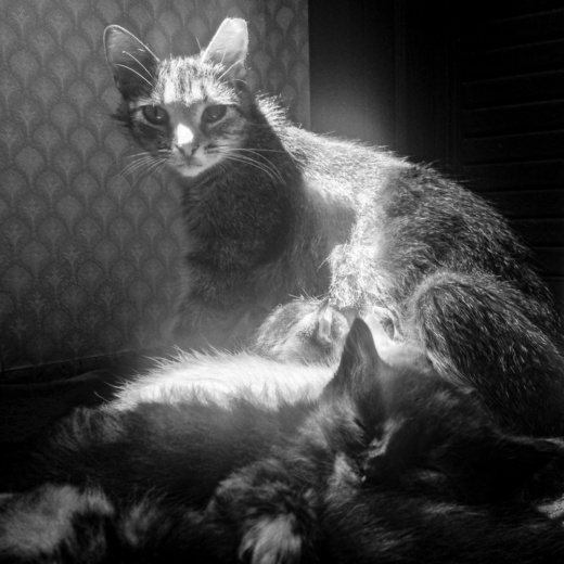 Ernie Feeding Kittens as Loraine Sleeps; New Franken, WI 2014; © 2014 Jason Houge, All rights Reserved