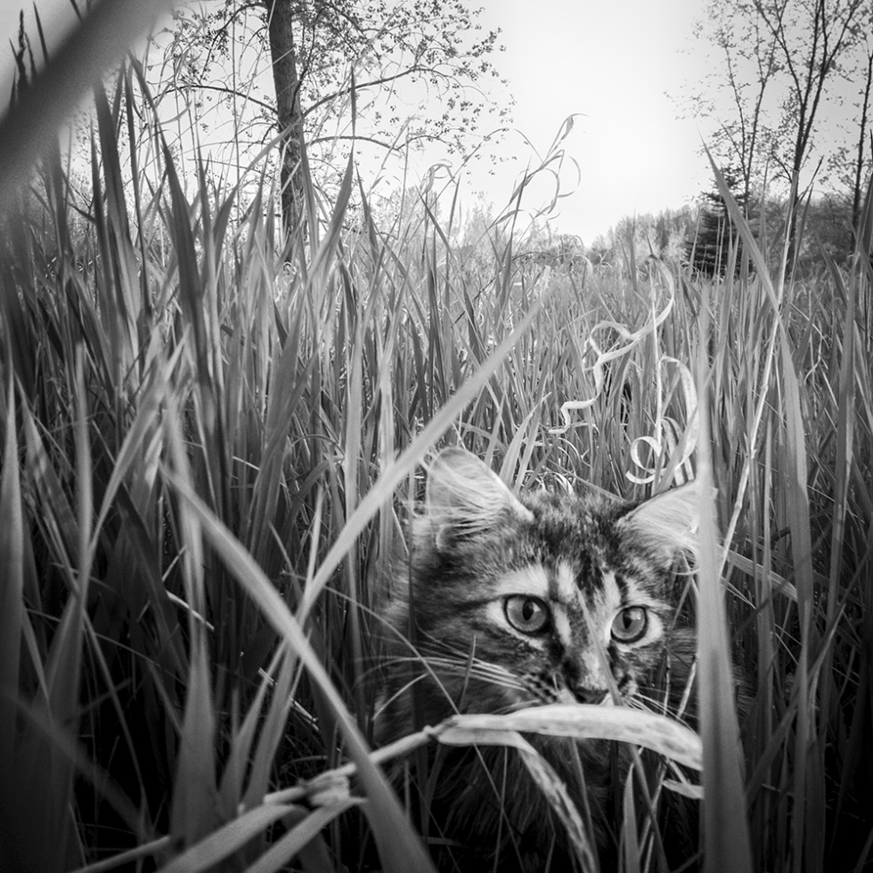 Moustache Cat; New Franken, WI 2014; © 2021 Jason Houge, All Rights Reserved